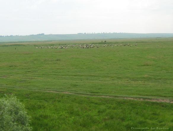 2008 06 27-28 (Dorohoi - Botosani) 016 [1600x1200]