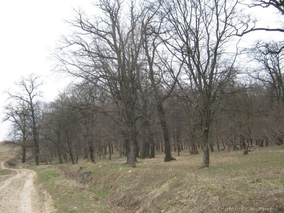 2009 03 29 (Suceava) 174 [1600x1200]