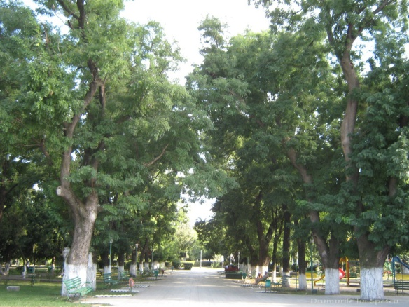 2010 08 16-20 (Targoviste - Bucuresti - Rosiori - Turnu - V. Ol) 412 [1600x1200]