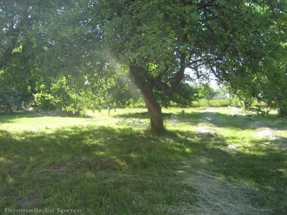 2011 06 05 (Probota - Dolhesti) 233 [Rezolutia desktop-ului]