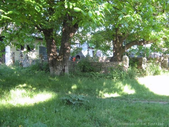 2011 06 05 (Probota - Dolhesti) 234 [Rezolutia desktop-ului]
