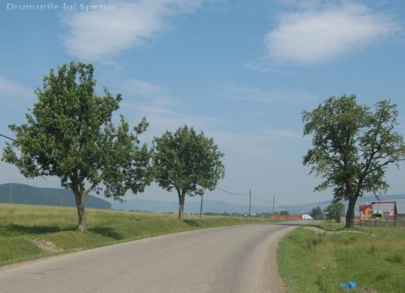 2011 06 19 (Berchisesti - Slatina) 050 [Rezolutia desktop-ului]