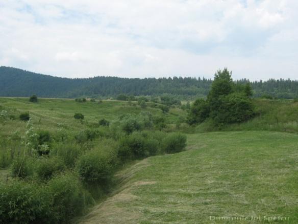 2011 06 19 (Berchisesti - Slatina) 093 [Rezolutia desktop-ului]