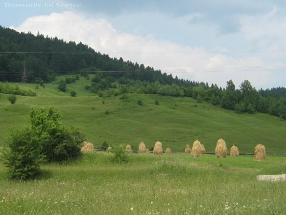 2011 06 19 (Berchisesti - Slatina) 149 [Rezolutia desktop-ului]