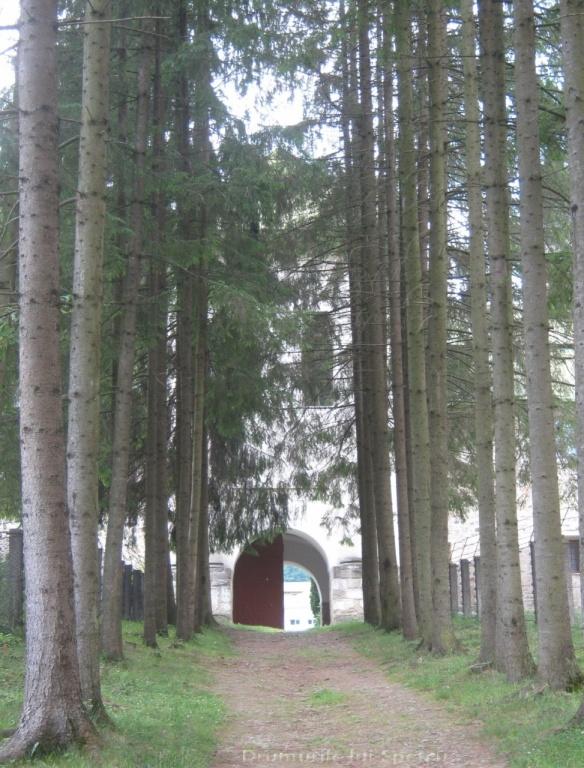 2011 06 19 (Berchisesti - Slatina) 161 [Rezolutia desktop-ului]