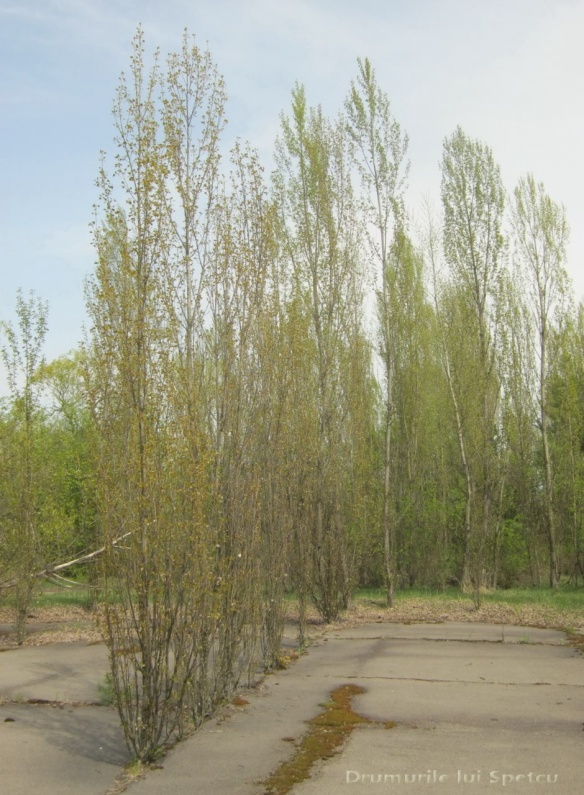 2013 05 01-05 (Cernobil)-059 [Rezolutia desktop-ului]