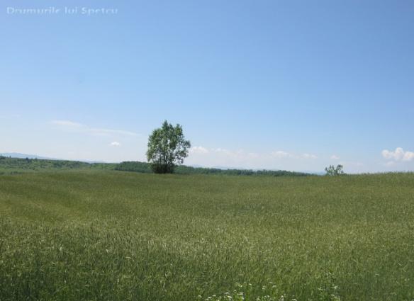 2013-06-16-botesti-horodniceni-rotopanesti-mihaiesti-pocoleni-054-rezolutia-desktop-ului